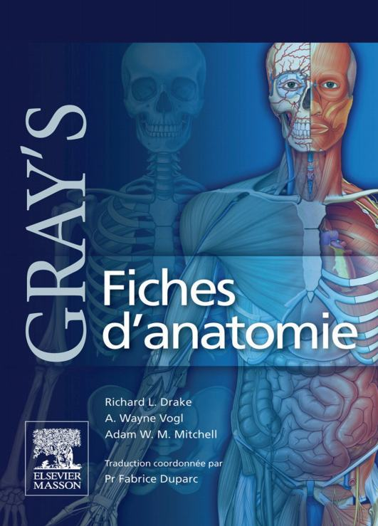 Gray's Fiches d'anatomie  Grays_11