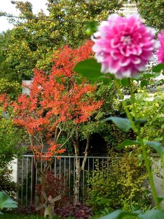 Un petit tour au jardin - Page 2 P1020711
