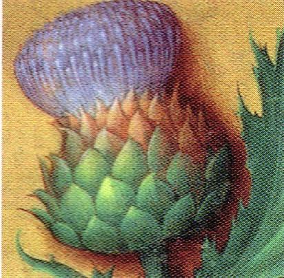 Coeur d'artichaut Artich10