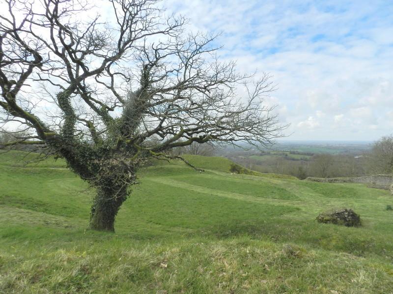 Le Rubricaire (fort romain en Nord-Mayenne) et la botanique Vauvyr43