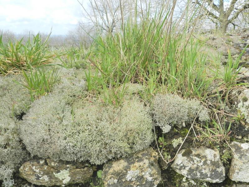 Le Rubricaire (fort romain en Nord-Mayenne) et la botanique Vauvyr47