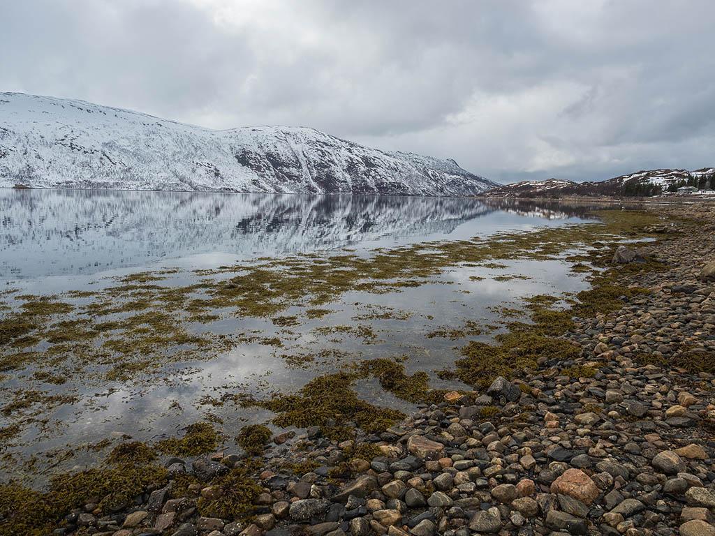 Norvège- Île de Senja  P4260010
