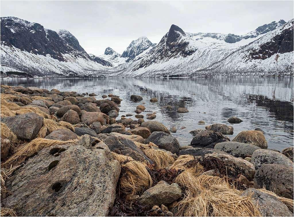Norvège- Île de Senja  P4270112