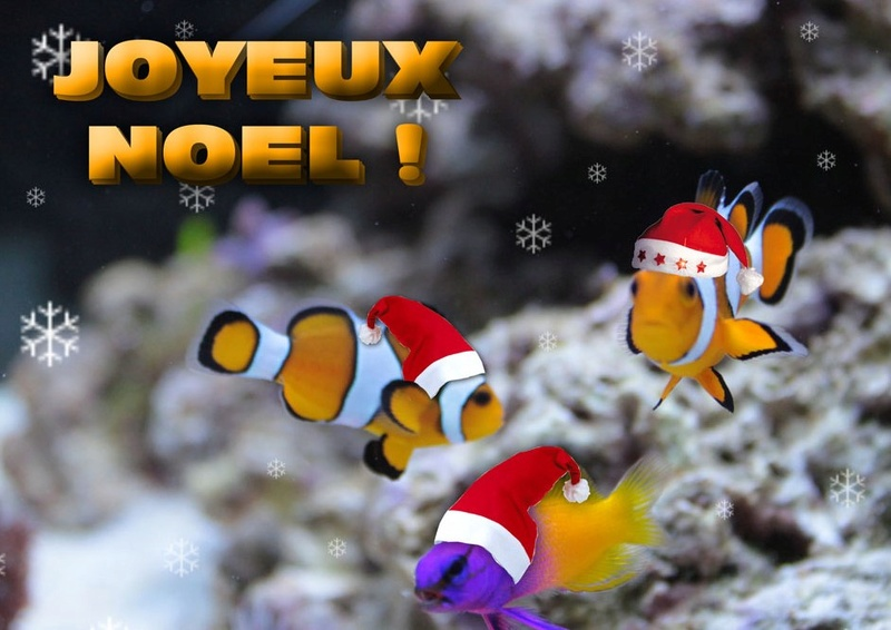 Joyeux NOEL ! Noel_r13