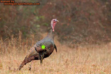 Diagram Wild Turkey Archery Shooting Diy Enthusiasts Wiring Diagrams