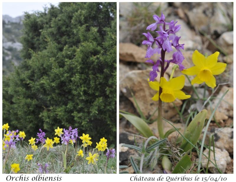 Quelques orchidées d'avril / mai Orchis10
