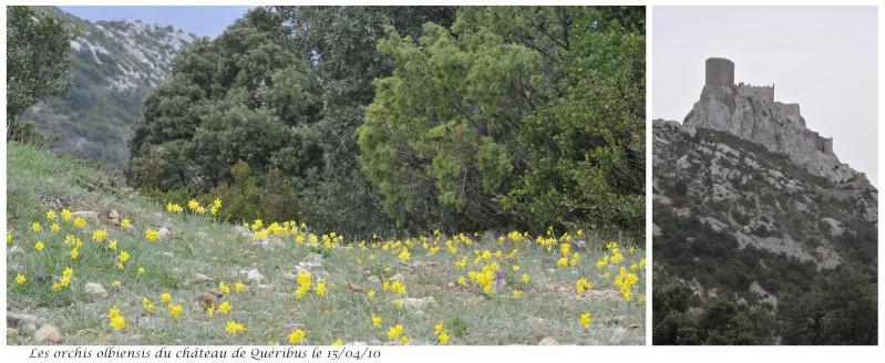 Quelques orchidées d'avril / mai Orchis11