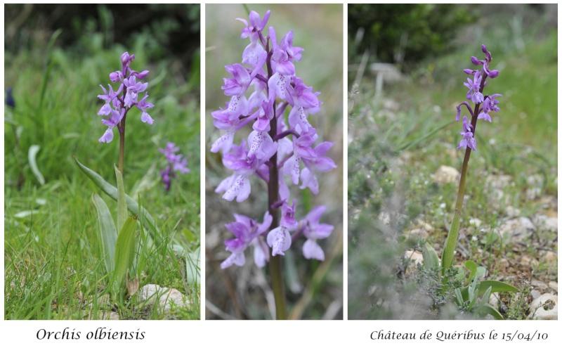 Quelques orchidées d'avril / mai Orchis12