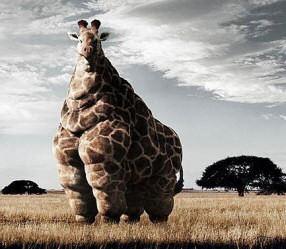 McDonalds Fun facts!!! Giraff10