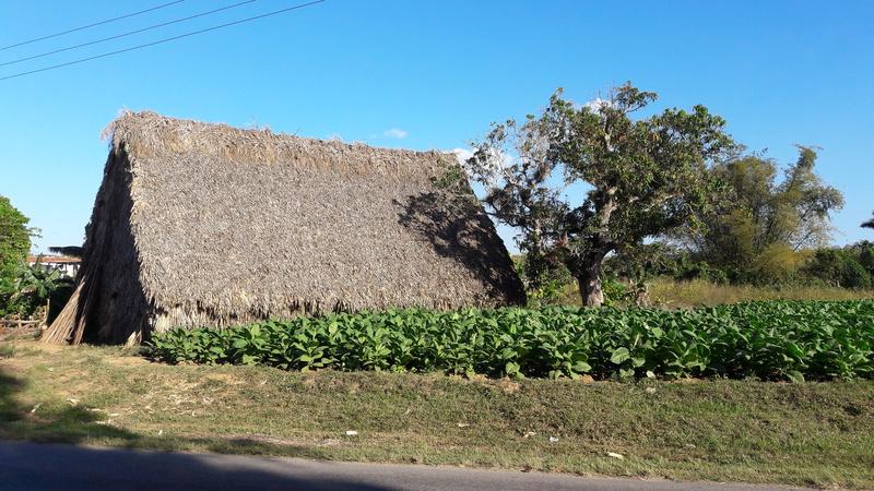 Au pays des Havanes 057_oy10