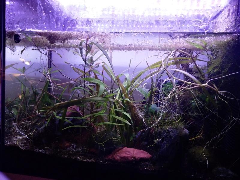 Aquarium de Protector - Page 2 Img_2010