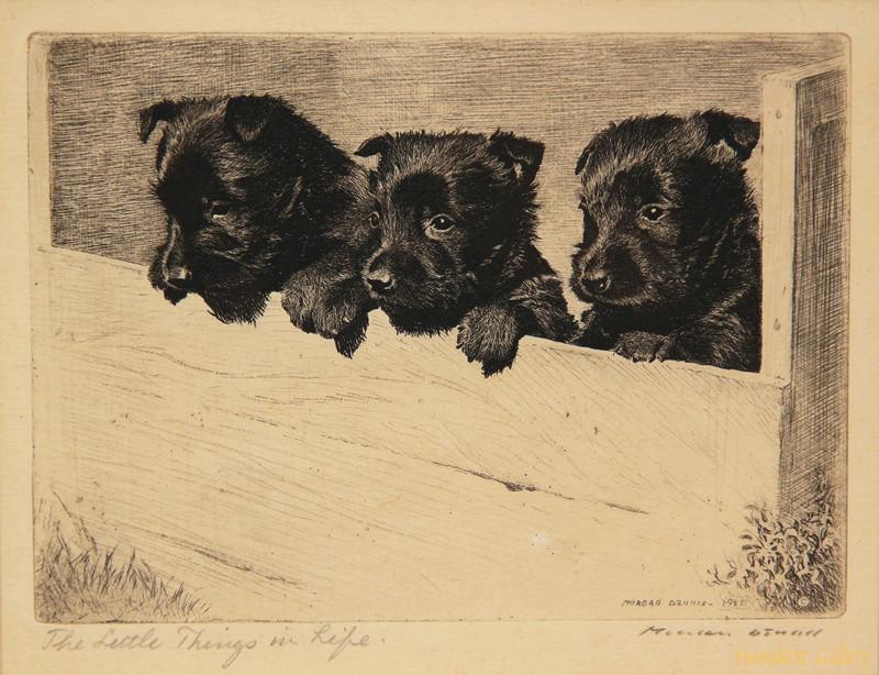 Scottish terrier
