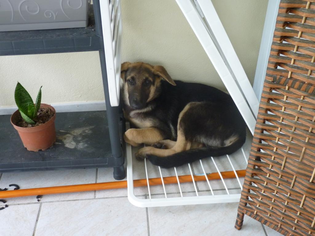 Des connaisseurs en chiens ?  P1030911
