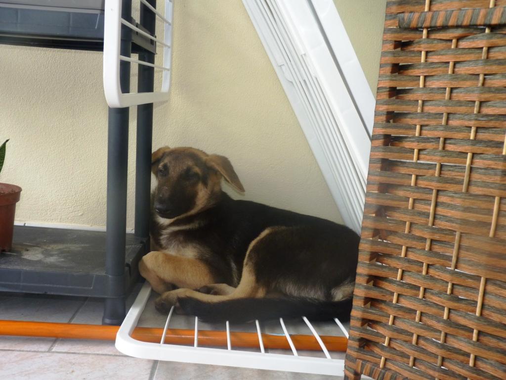 Des connaisseurs en chiens ?  P1030912