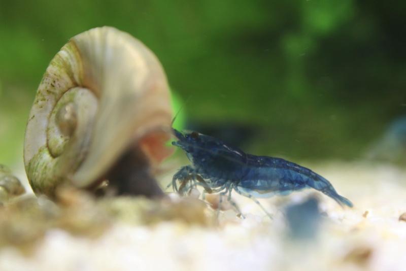 Retour d'expérience - traitement mycose crevettes Dcim_110