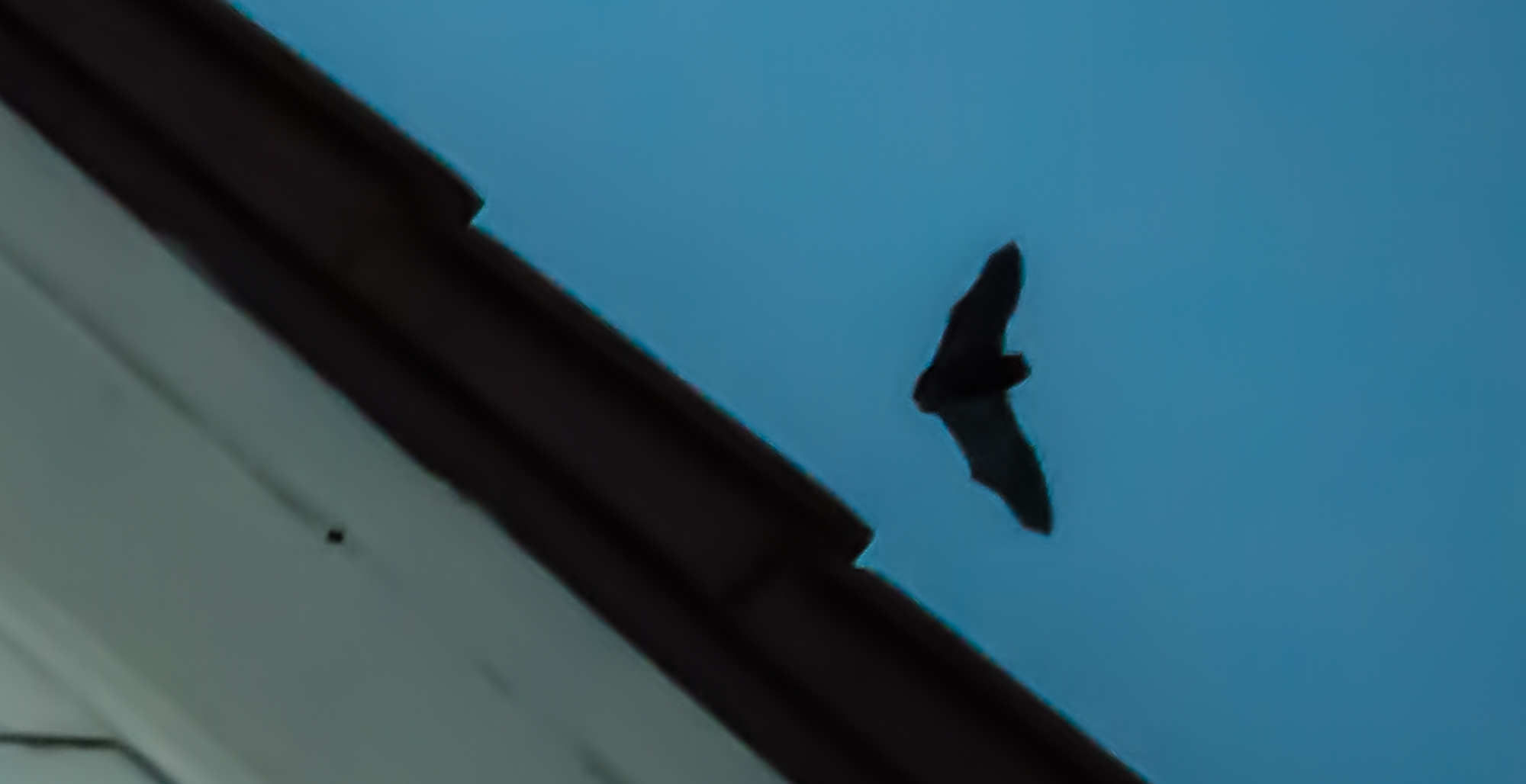 Fledermäuse unterm Dach 1_1_vo10