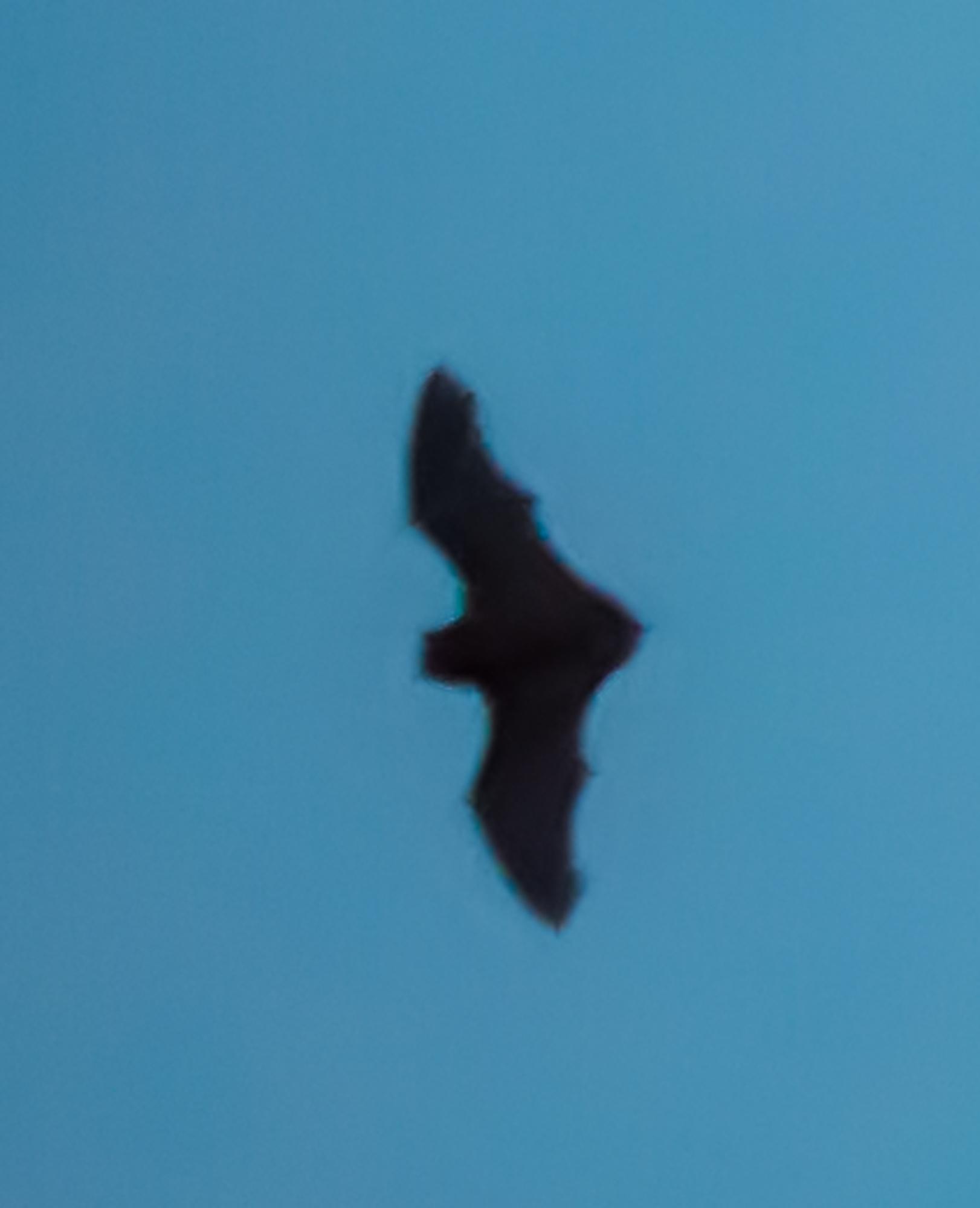 Fledermäuse unterm Dach 1_1_vo11