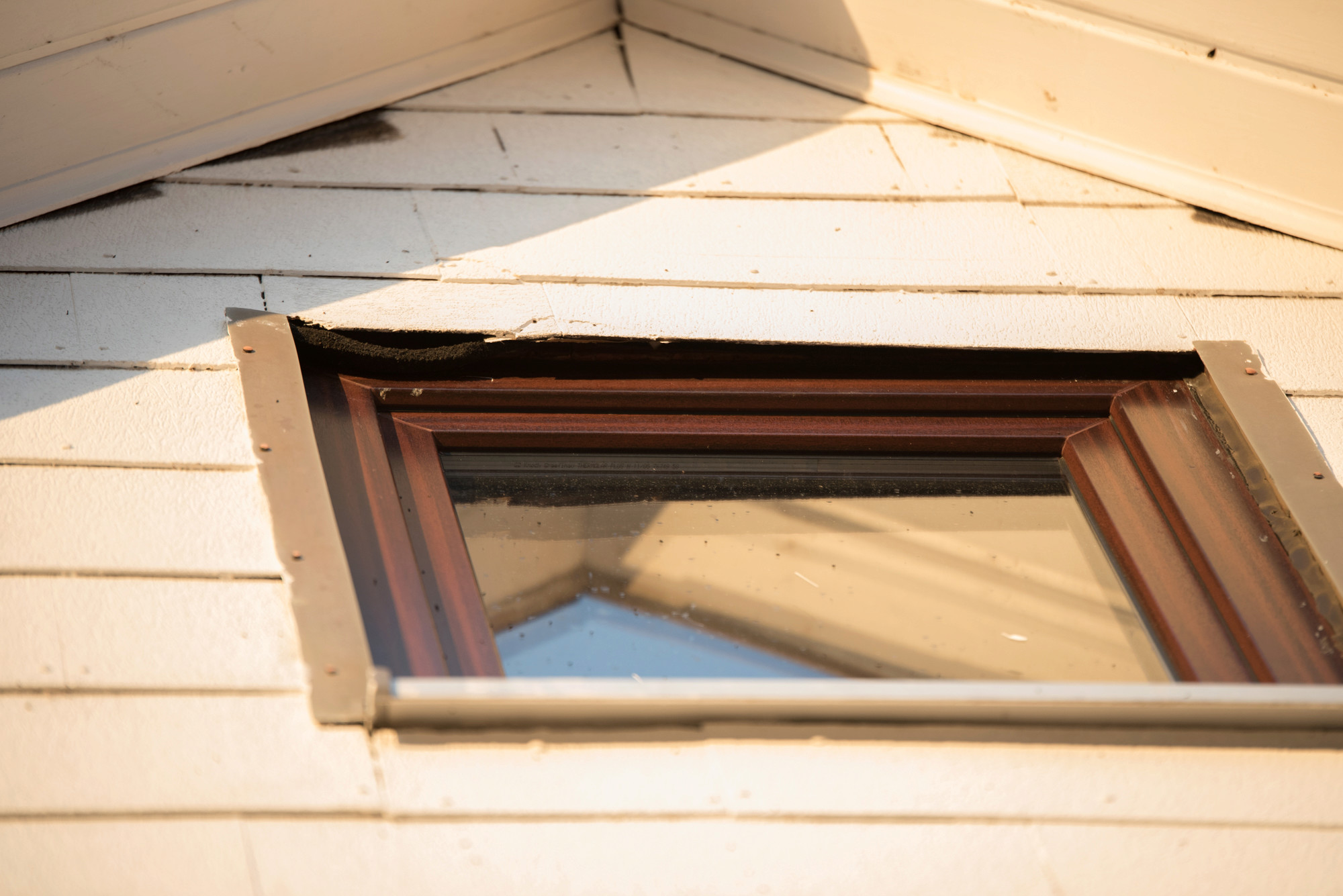 Fledermäuse unterm Dach 1_1_vo12