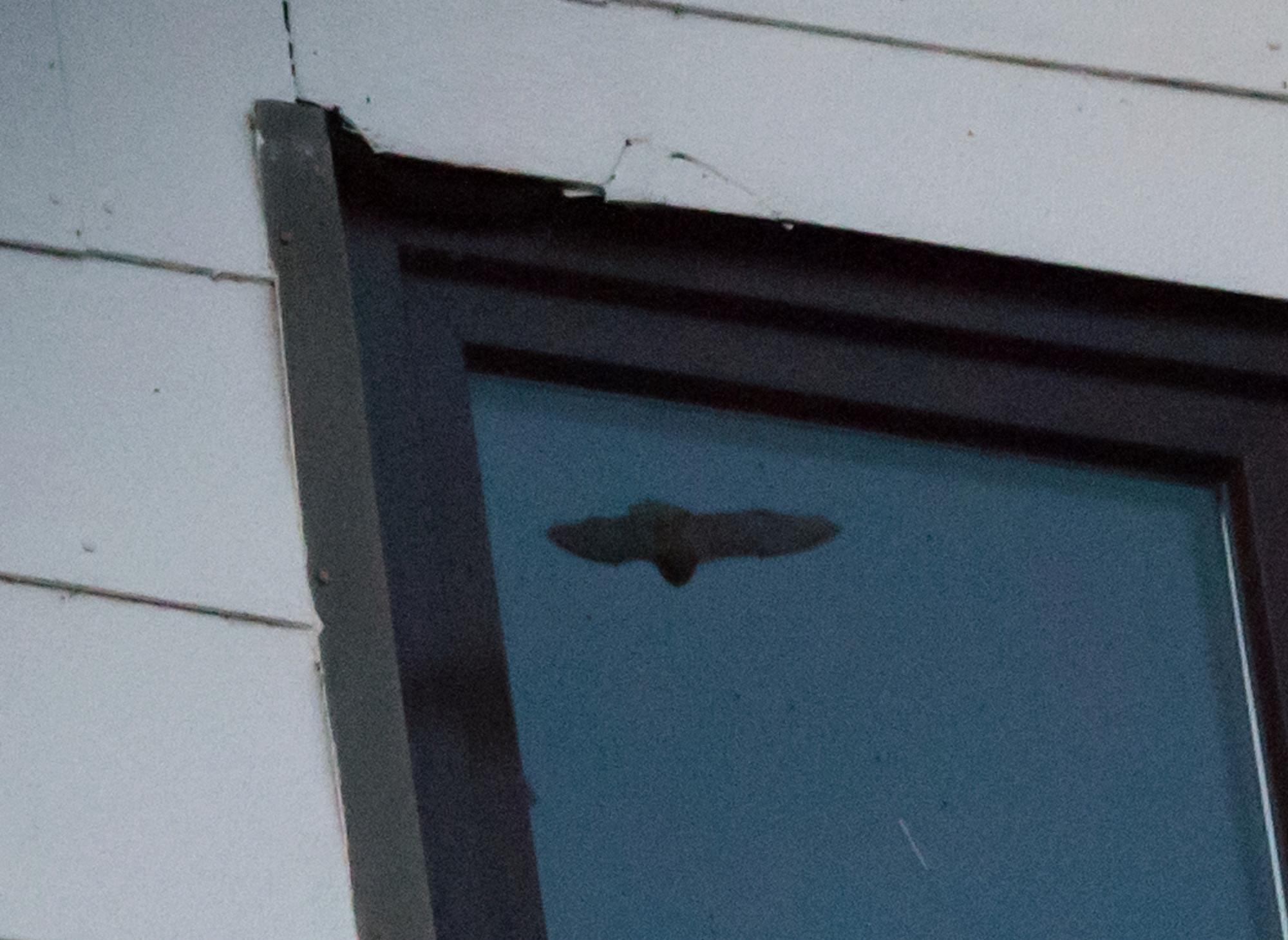 Fledermäuse unterm Dach 1_1_vo13