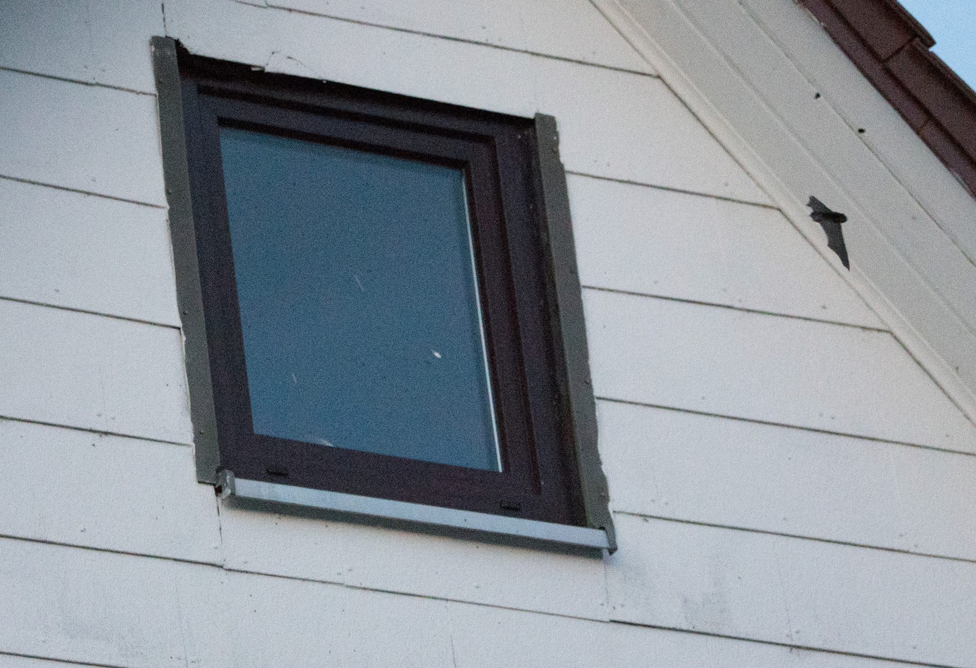 Fledermäuse unterm Dach 1_1_vo14