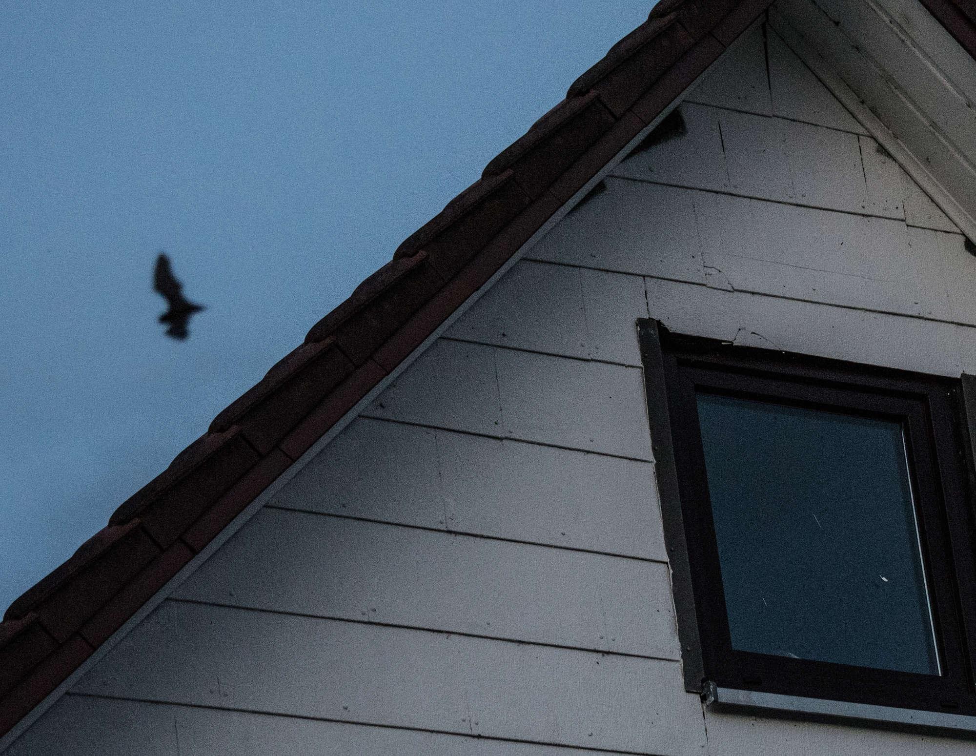 Fledermäuse unterm Dach 1_1_vo15