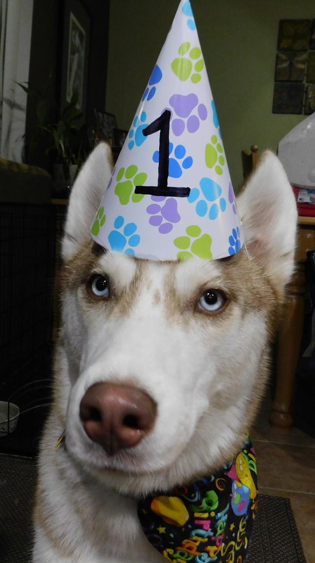 Finn's 1st Birthday Dscn2311