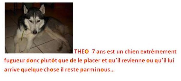 Les doudous à la recherche d'un  parrain / d'une marraine Theo10