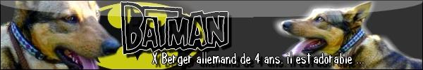 BATMAN, x BERGER ALLEMAND  en Moselle (57) - Page 2 Bannie54