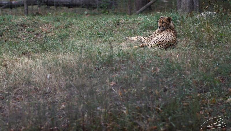 Zoo de Vienne Img_0410