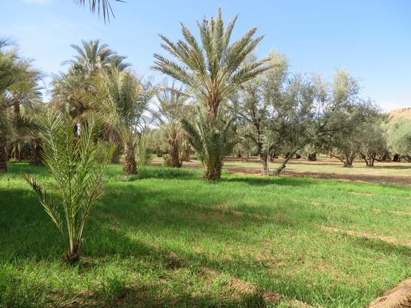 [Maroc Camp/Dernières nouvelles] au Hakkou : Ahmad, nouveau Guide des Espaces Naturels Akkou_18
