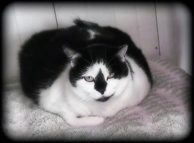 LEONIE (Noire et blanche) Picsar14