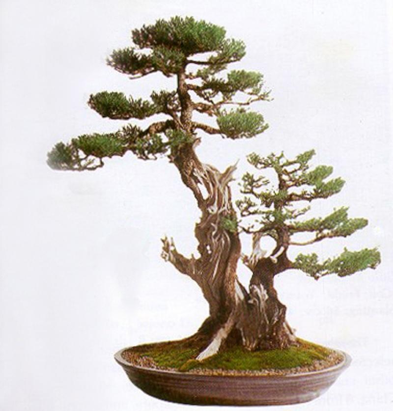 Transformation in bonsai 111