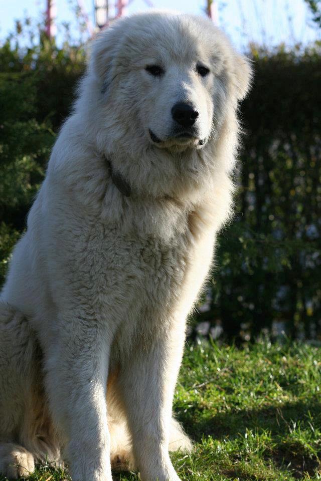 Animal décédé dont les réponses ne peuvent être prises à la légère 39544910