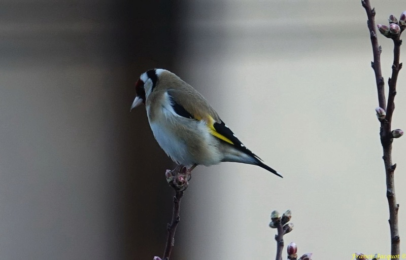 [Ouvert] FIL - Oiseaux. - Page 8 0112