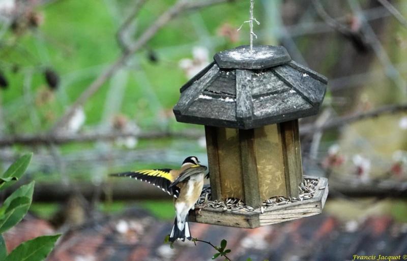 [Ouvert] FIL - Oiseaux. - Page 11 0213