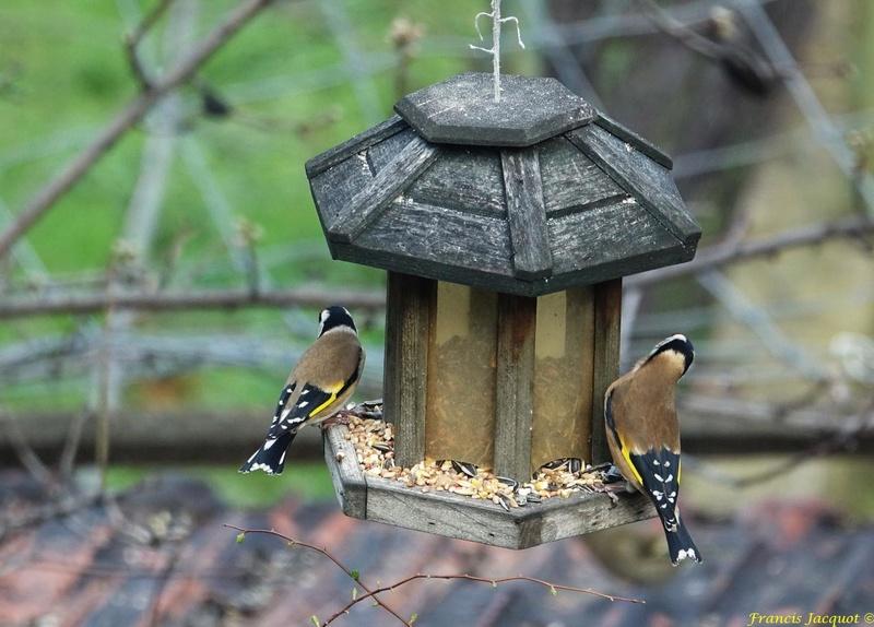 [Ouvert] FIL - Oiseaux. - Page 8 0311