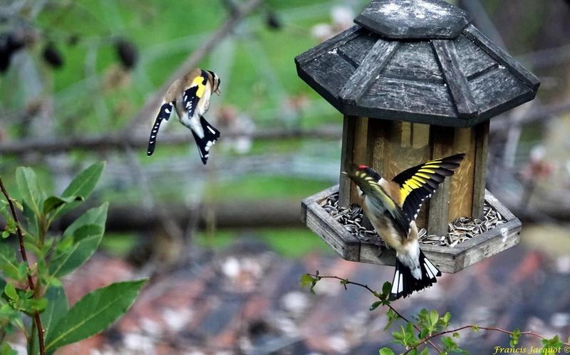 [Ouvert] FIL - Oiseaux. - Page 11 0413