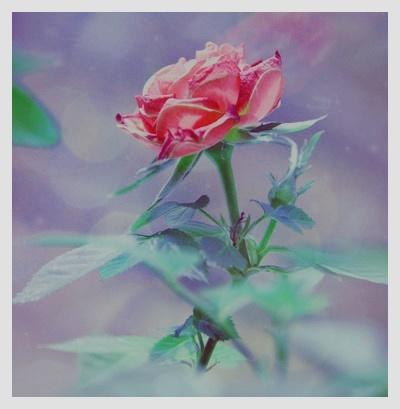 ::. LE GRAND RÉPERTOIRE × Rose_g10