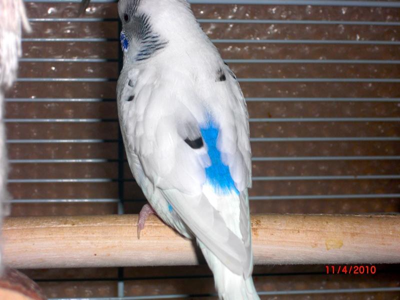 Photos de mes perruches Cimg0215