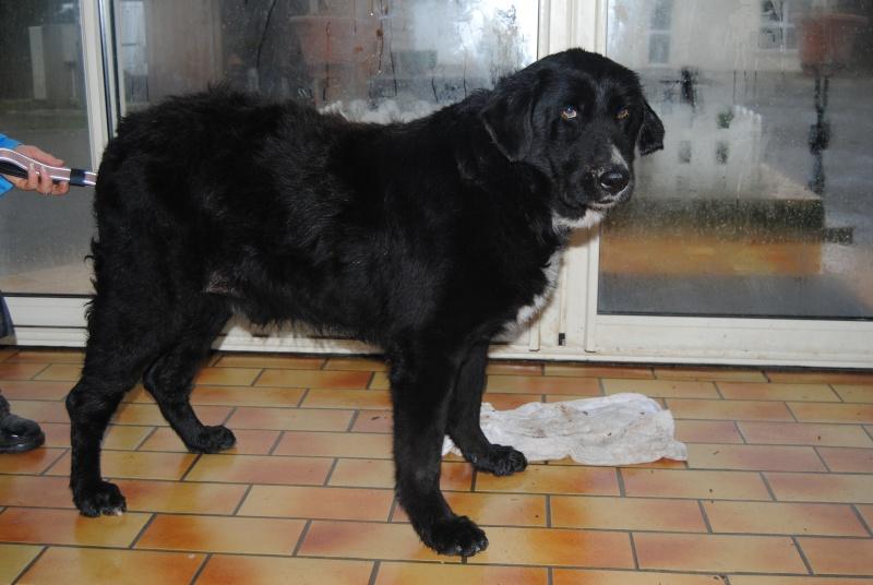 Wolf est en cours d'adoption !!!!!!!!!! Wolf adopté,puis avec son copain Doudou Dsc_0412