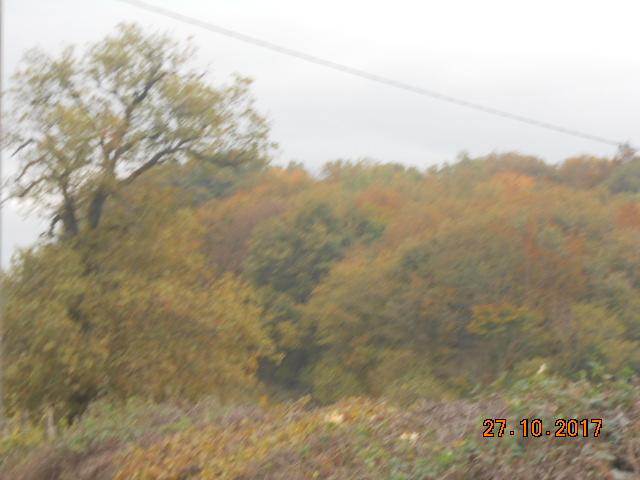 couleur d'automne  Dscn4137