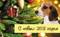 2018 год-год СОБАКИ  Aeezae10