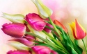 ТЮЛЬПАН  Flower22