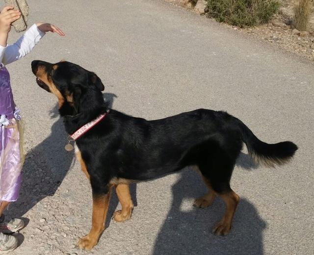ARIELLE, petite croisée berger, 23 kg, un an, OK enfants, affectueuse et joueuse, Espagne Img-2010