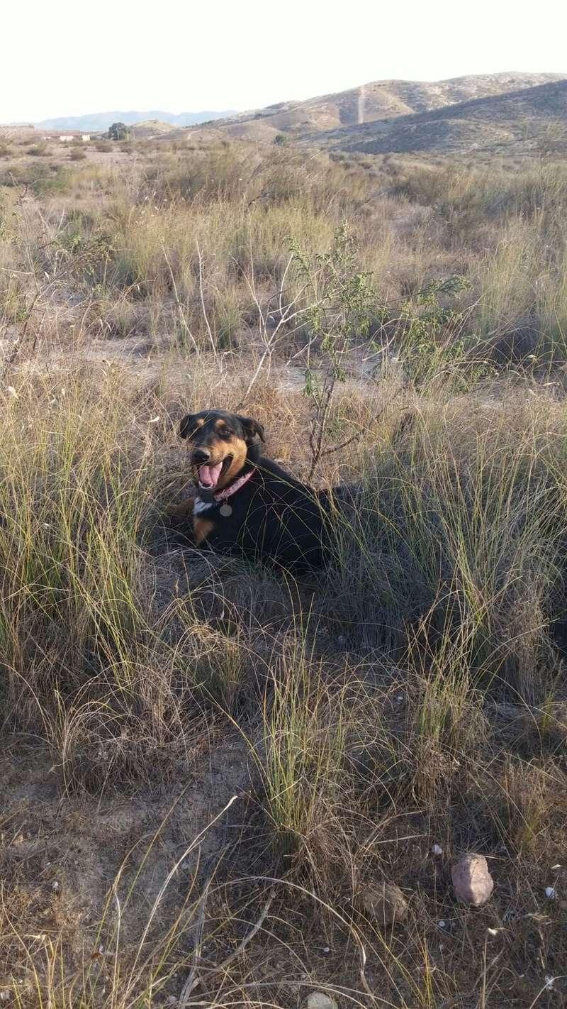ARIELLE, petite croisée berger, 23 kg, un an, OK enfants, affectueuse et joueuse, Espagne Img-2012