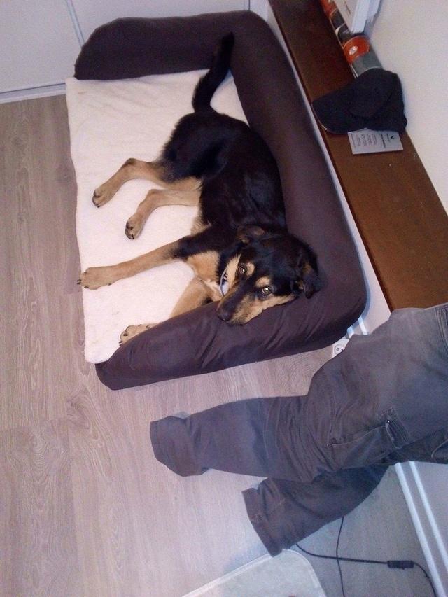 ARIELLE, petite croisée berger, 23 kg, un an, OK enfants, affectueuse et joueuse, Espagne Img-2026