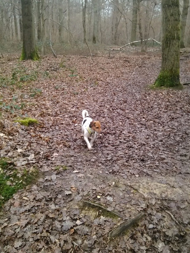 NIKO chien parfait, Jack Russel 5 ans 8/9 kg, région parisienne Img_2015