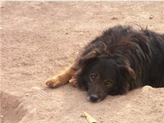 LEO, Ribercan, adopté après de nombreuses années de refuge, par sa fa espagnole Leo110