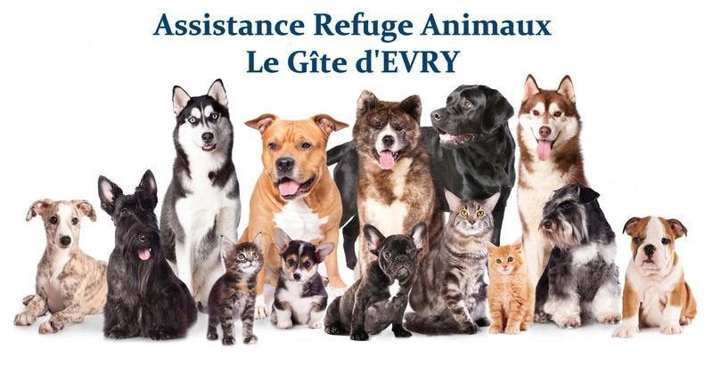 Le forum d'Assistance Refuge Animaux