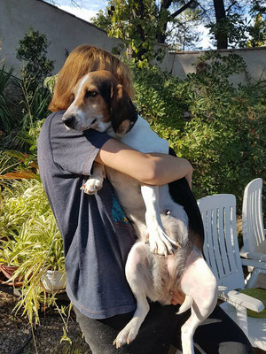 A Adopter Olga, adorable chienne type beagle harrier de 7 ans (13) Image_13